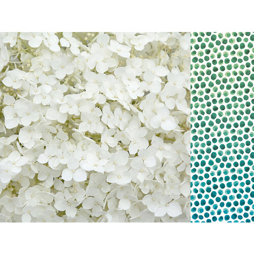 Kaisercraft - Morning Dew Collection - 12 x 12 Double Sided Paper - Inhale
