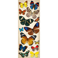 K and Company - Adhesive Chipboard - Natural Butterflies