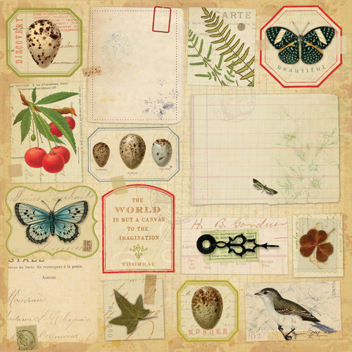 K and Company - Flora and Fauna Collection - 12 x 12 Paper - Botanical Ephemera
