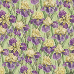 K and Company - Cottage Garden Collection by Tim Coffey - 12 x 12 Paper - Iris