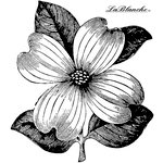 LaBlanche - Flowers Collection - Foam Mounted Silicone Stamp - Dogwood