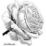 LaBlanche - Flowers Collection - Foam Mounted Silicone Stamp - Single Rose