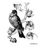 LaBlanche - Foam Mounted Silicone Stamp - Singing Bird