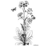 LaBlanche - Foam Mounted Silicone Stamp - Meadow Flower