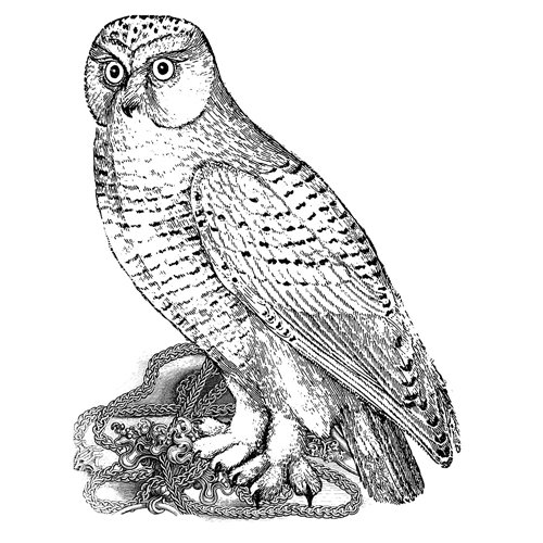 LaBlanche - Foam Mounted Silicone Stamp - Watching Owl