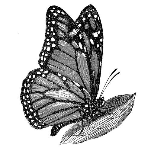 LaBlanche - Foam Mounted Silicone Stamp - Monarch Butterfly