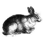 LaBlanche - Foam Mounted Silicone Stamp - Resting Rabbit