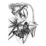 LaBlanche - Foam Mounted Silicone Stamp - Elegant Flower