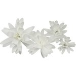 Little B - Paper Flower - Petal Kits - White Daisy