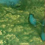 Lindy's Stamp Gang - Starburst Color Shot - 2 Ounce Jar - Ponderosa Pines Olive