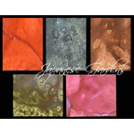 Lindy's Stamp Gang - Starburst Color Shot - Set - Japanese Gardens