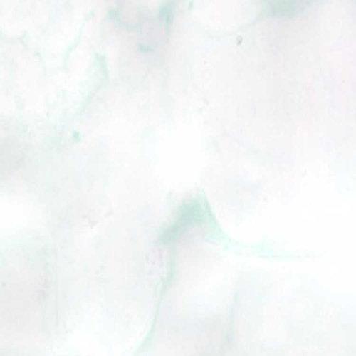 Lindy's Stamp Gang - Starburst Spray - 2 Ounce Bottle - Ghostly Gargoyle White