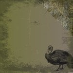 Moxxie - Hunting Collection - 12 x 12 Double Sided Paper - Wild Turkey