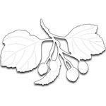 Penny Black - Creative Dies - Berries and Leaves