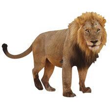 Paper House Productions - Zoo Collection - Mini Die Cut Piece - Lion
