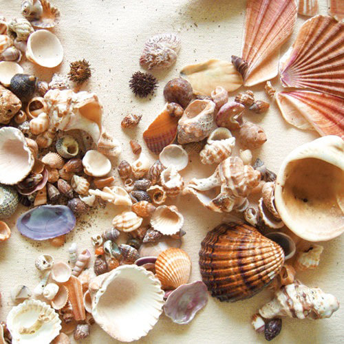 Paper House Productions - Beach Collection - 12 x 12 Paper - Beach Shells