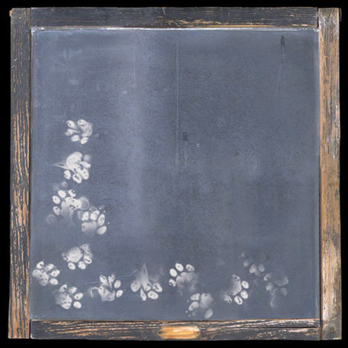 Paper House Productions - Cat Collection - 12 x 12 Paper - Chalk Paw Prints