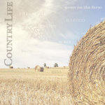 Paper House Productions - Farm Collection - 12 x 12 Paper - Field of Hay