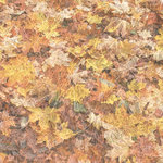 Paper House Productions - Autumn Collection - 12 x 12 Paper - Fall Foliage