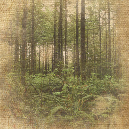 Paper House Productions - Oregon Collection - 12 x 12 Paper - Pine Forest
