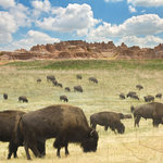 Paper House Productions - South Dakota Collection - 12 x 12 Paper - Where the Buffalo Roam