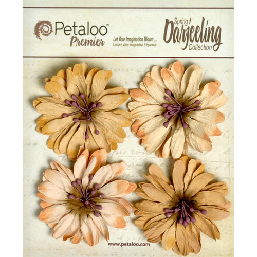 Petaloo - Darjeeling Collection - Floral Embellishments - Daisies - Shabby Beige