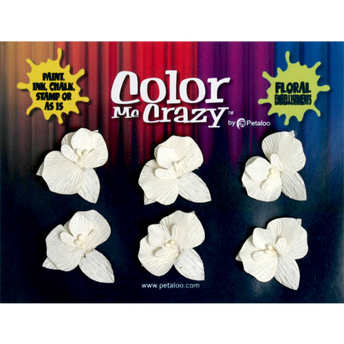Petaloo - Color Me Crazy Collection - Orchids - Small - Dendrobiums
