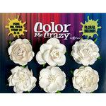 Petaloo - Color Me Crazy Collection - Mixed Floral Assortment