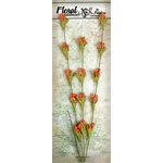 Petaloo - Canterbury Collection - Honeysuckle Vine - Scarlet