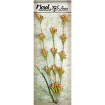 Petaloo - Canterbury Collection - Honeysuckle Vine - Peach