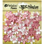 Petaloo - Penny Lane Collection - Floral Embellishments - Mini Daisy Petites - Antique Rose