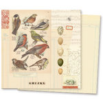 7 Gypsies - Conservatory Collection - 12 x 12 Double Sided Paper - Aviary