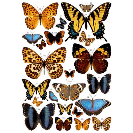7 Gypsies - Rub Ons - Color - Butterflies