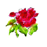 Rubbernecker Stamps - Cling Mounted Rubber Stamp Set - Blooming Roses