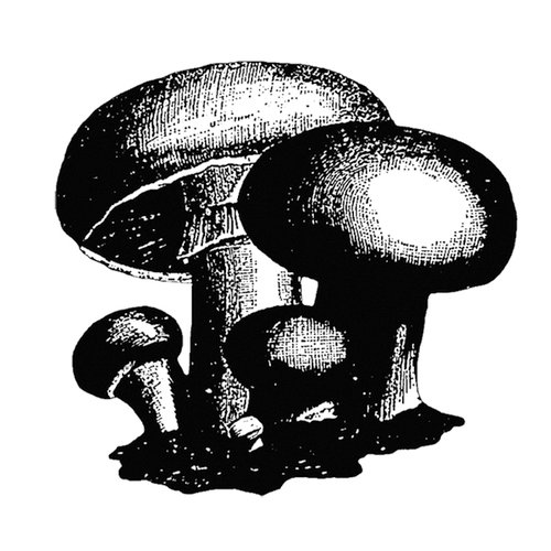 Stamper's Anonymous - Donna Salazar - Cling Mounted Rubber Stamp Set - Mushroom