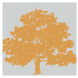 Teresa Collins - 8 x 8 Transparency - Family Tree, CLEARANCE