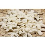 Prima - E Line - Flower Embellishments - White Mix 2