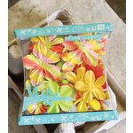 Prima - Sunshine Flowers Collection - Flowers - Lucy, CLEARANCE