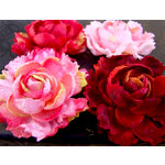 Prima - Windsor Roses Collection - Flowers - London