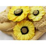 Prima - Parlor Petals Collection - Flower Embellishments - Tudor