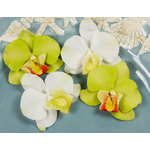 Prima - Island Orchid Collection - Flower Embellishments - Amazon, CLEARANCE