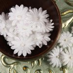 Prima - Pearl Penache Collection - Fabric Flower Embellishments - White Wedding, CLEARANCE