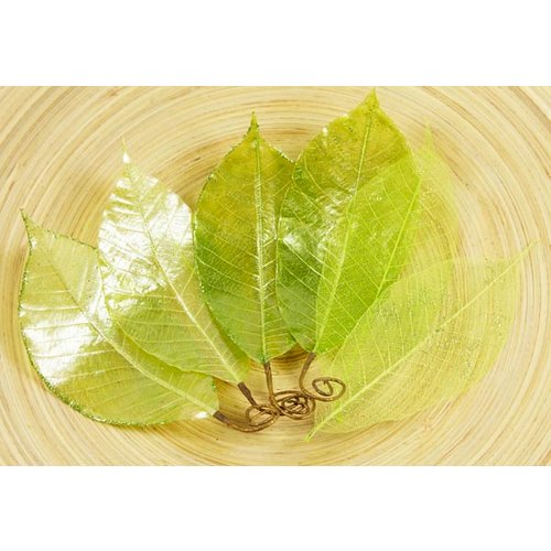 Prima - Temple Collection - Lacquered Leaves - Keaw Green