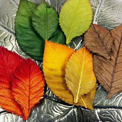 Prima - Autumn Collection - Mulberry Leaves - October