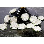 Prima - Innoscence Collection - Flower Embellishments - Mix 42, CLEARANCE