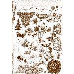 Prima - Botanical Collection - Flocked Rub Ons