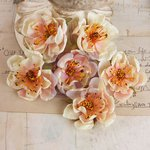 Prima - Bel Canto Collection - Flower Embellishments - Cream