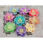 Prima - Lucido Collection - Flower Embellishments - 1