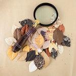 Prima - The Archivist Collection - Flower Embellishments - Archival