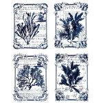 Prima - Re-Design Collection - Transfer - Seaweed